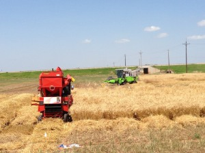 Both small plot combines running at Chickasha