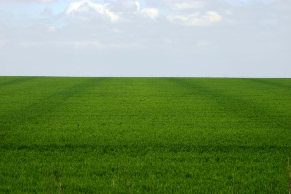 Poor nitrogen application can result in a streaked field. Some of the areas in this field were over fertilized while some were under fertilized resulting in wasted nitrogen and less than optimal crop yield.