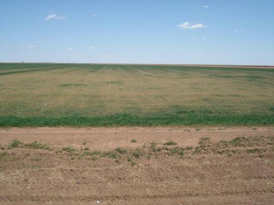 http://osuwheat.files.wordpress.com/2014/04/altus-area-wheat-april-2014-001.jpg